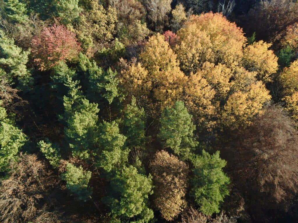 Eichenwald voller gesunder Bäume